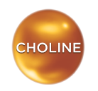 Nutrition for faster learning - Choline